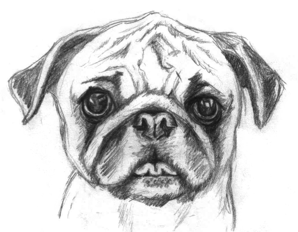 Pugs are cute - Alexis Eve